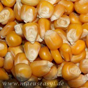 Saaten für Mäusefutter - Mais