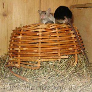 Flechtkorb für Mäuse