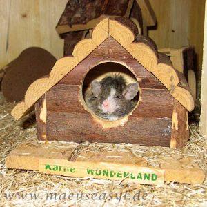 Mäusekäfig einrichten - Holzhäuschen