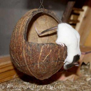 Mäusekäfig einrichten - Kokosnuss