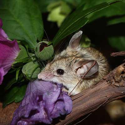 Das Mäuseasyl
