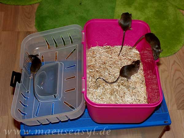 Müssen Mäuse zum Tierarzt