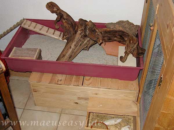 Schlaf-, Bade- und Futterecke aussehen für Wüstenspringmäuse